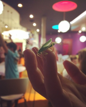 A grasshopper decided to join some friends and I for ice cream