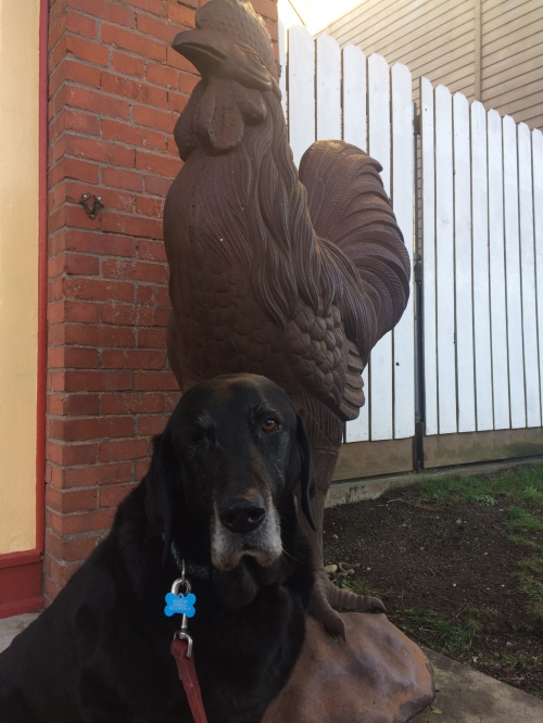 Rooster and a rooster statue!