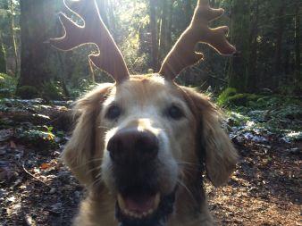 milo antlers