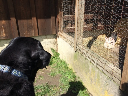 Staring contest with a rabbit! The rabbit won