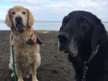 Two happy pups at the beach!