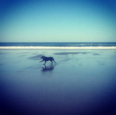 Rooster loves running on the beach!