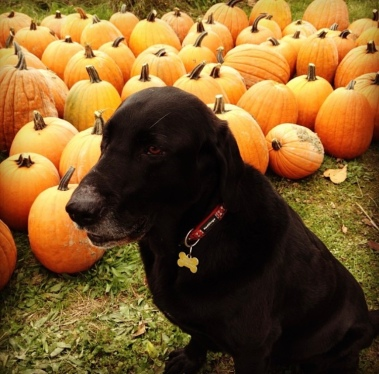 He was so unsure about all these pumpkins!
