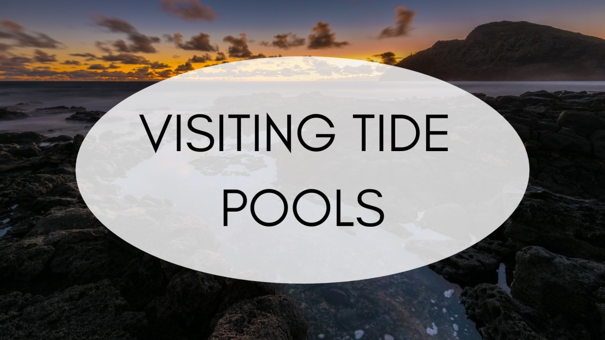 Exploring an Underwater World at Seattle Aquarium ...  |Pacific Northwest Tide Pool