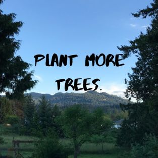 Plant more trees.